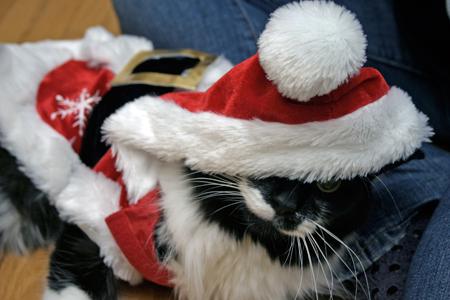 christmas_cat_2
